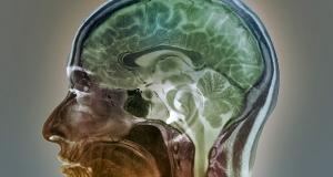 Блокируя определенные протеины, можно предотвратить потерю памяти, вызванную старением