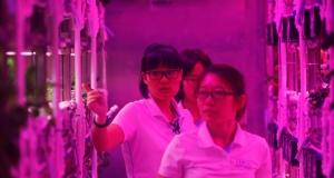 200 днів в ізоляції: у Китаї стартував експеримент з симуляції життя на Місяці