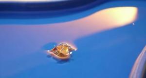 Крохотный робот, который может ползти, взбираться на препятствия и плыть