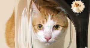На рынок выйдет умная кормушка для кота с функцией распознавания морды