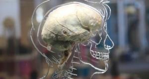 Ученые создали компьютер, работающий как человеческий мозг