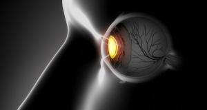 """Исследование показало, что """"язык"""" сетчатки глаза изменяется с яркостью"""