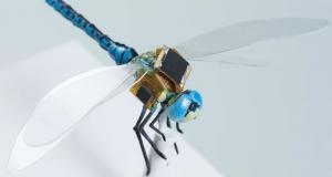 Як створюються генетично модифіковані комахи-кіборги