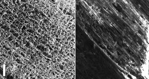 Новітній наноматеріал навчились добувати із сосни