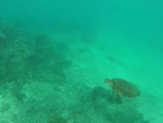 GoPro, оказавшаяся в океане, показала волшебство подводного мира