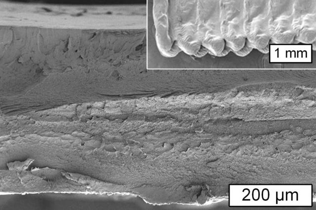 3D-принтери зможуть друкувати рослинним матеріалом