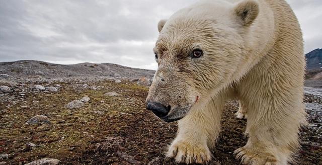 Экономь электроэнергию – спаси Белых медведей от вымирания!