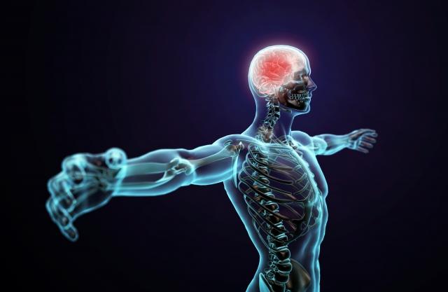 Вчені дізналися скільки разів у людини впродовж життя регенерують клітини