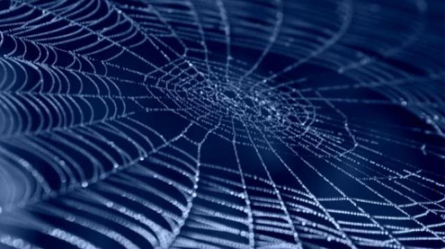 Пауки, обработанные карбоновым раствором, сплели сверхпрочную паутину
