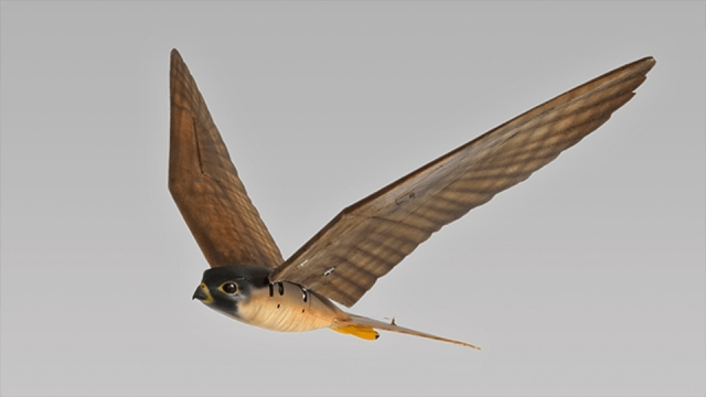 Сокіл-робот відлякуватиме птахів у аеропорту Канади