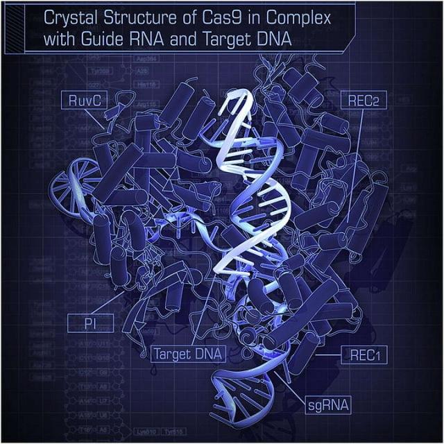 Программное обеспечение, которое точно предскажет, что происходит при изменении гена