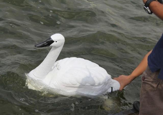 Роботы-лебеди, созданные для красоты и мониторинга чистоты воды