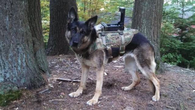 Cerberus превращает военных собак в киборгов