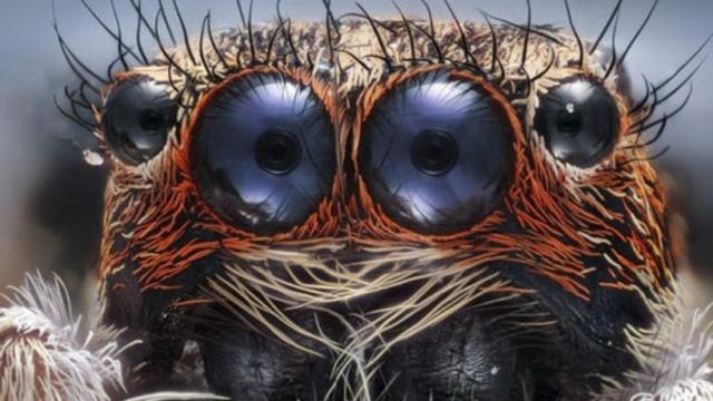 10 дивовижних знімків мікросвіту: переможці конкурсу Nikon Small World 2017