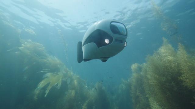 BIKI - перша у світі біонічна риба-фотограф