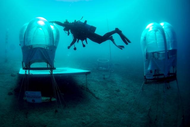 Как выращивают клубнику на подводных фермах