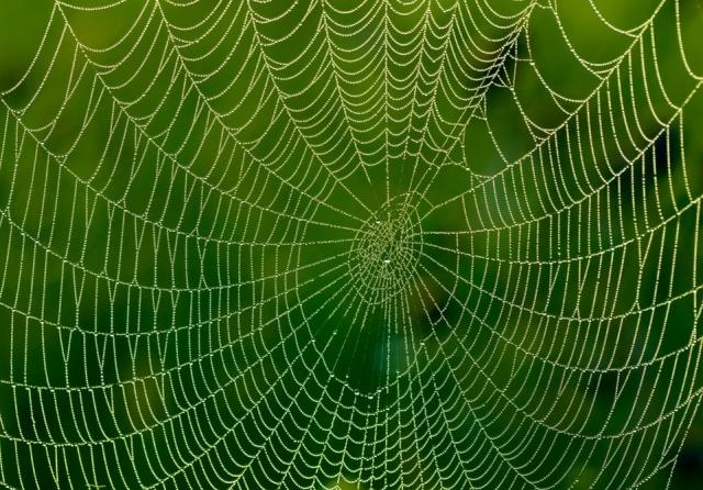 Наноматеріали у раціоні павуків дозволили їм cплести надміцне павутиння
