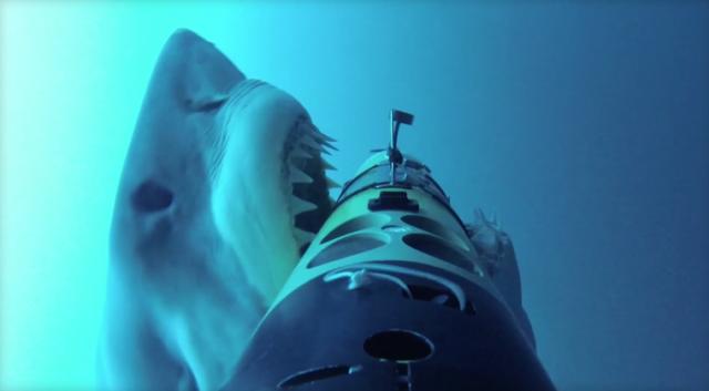 Камера акуле не друг, или как GoPro пережила острые зубы морского чудовища