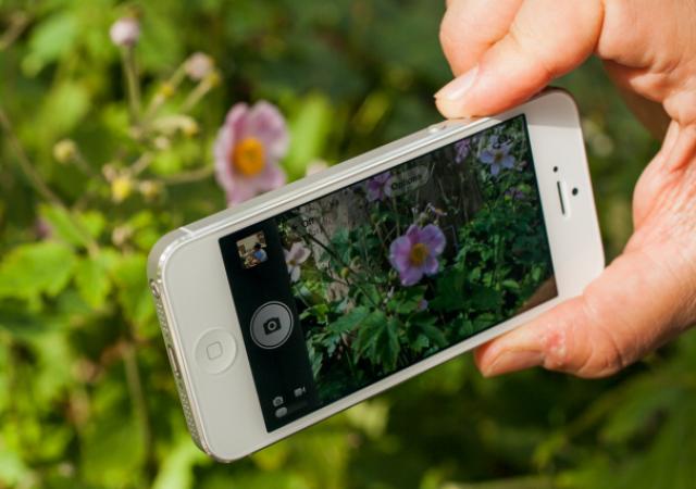 Фотоохота с использованием трех ведущих смартфонов, кто круче?