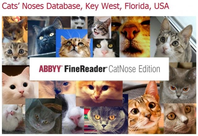 ABBYY FineReader научился распознавать … котов!