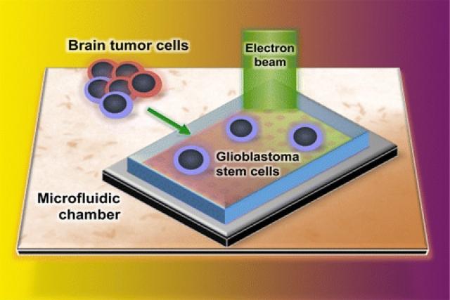 Визуализация взаимодействия наночастиц с опухолевыми клетками в реальном времени