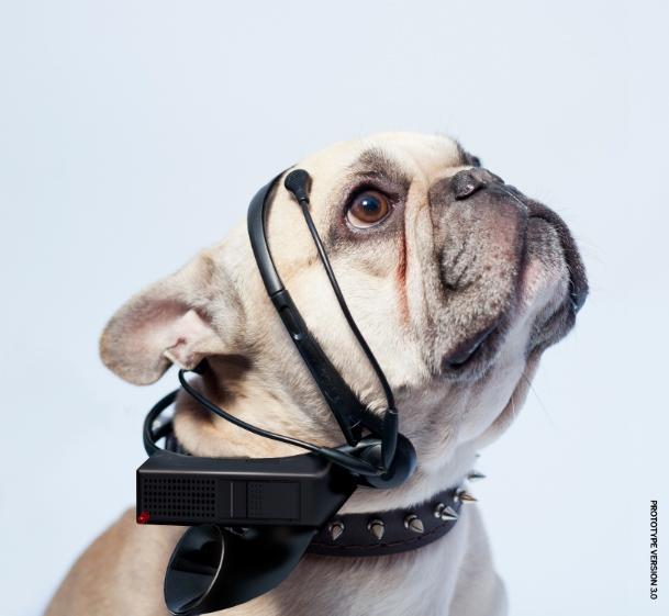 Переводчик с «собачьего» на английский создадут благодаря финансированию общественности
