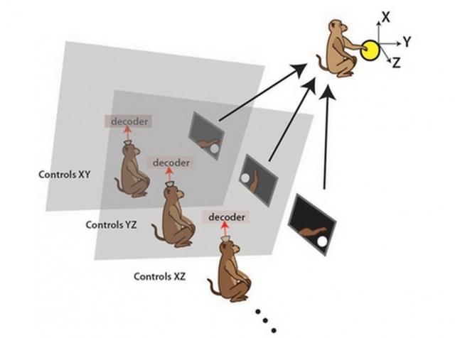 Ученые смогли связать несколько животных в мозговую сеть или на пути к созданию «органических компьютеров»