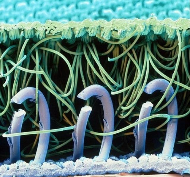 Микроскоп или хочу все знать!
